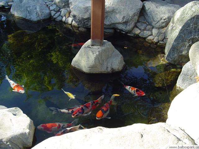 Japanese friendship garden balboa park san diego for Japanese friendship garden san jose koi fish